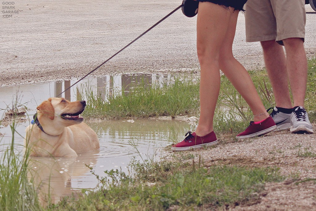 Indy Mile 2015 Dog In Puddle